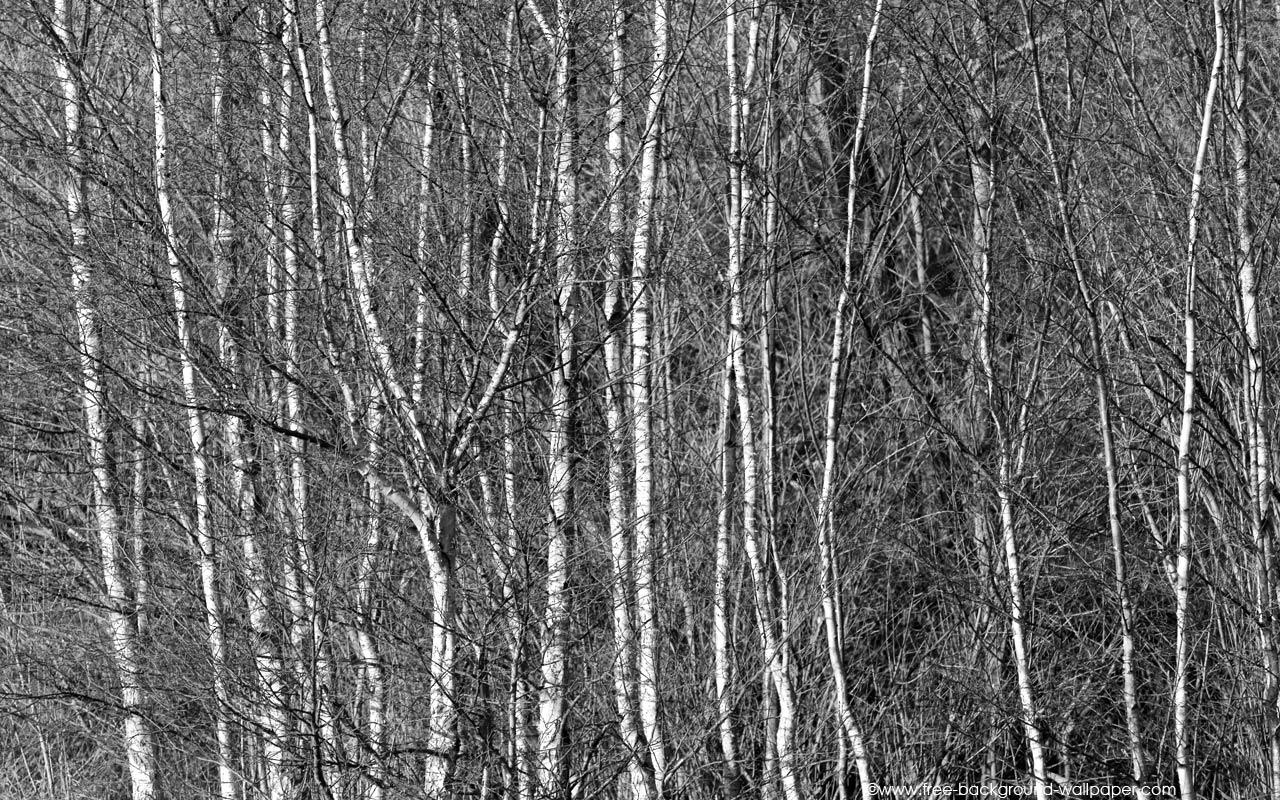 Birch Shoes Birch Bark Birkenrinde Vogelnetz Bird Net Ostereier 1280x800
