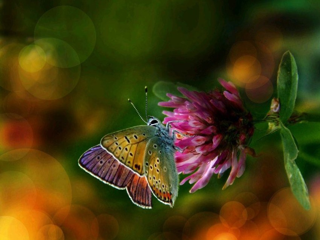 Colorful Wings Flower Butterfly Background Wallpapers Butterfly 1024x768