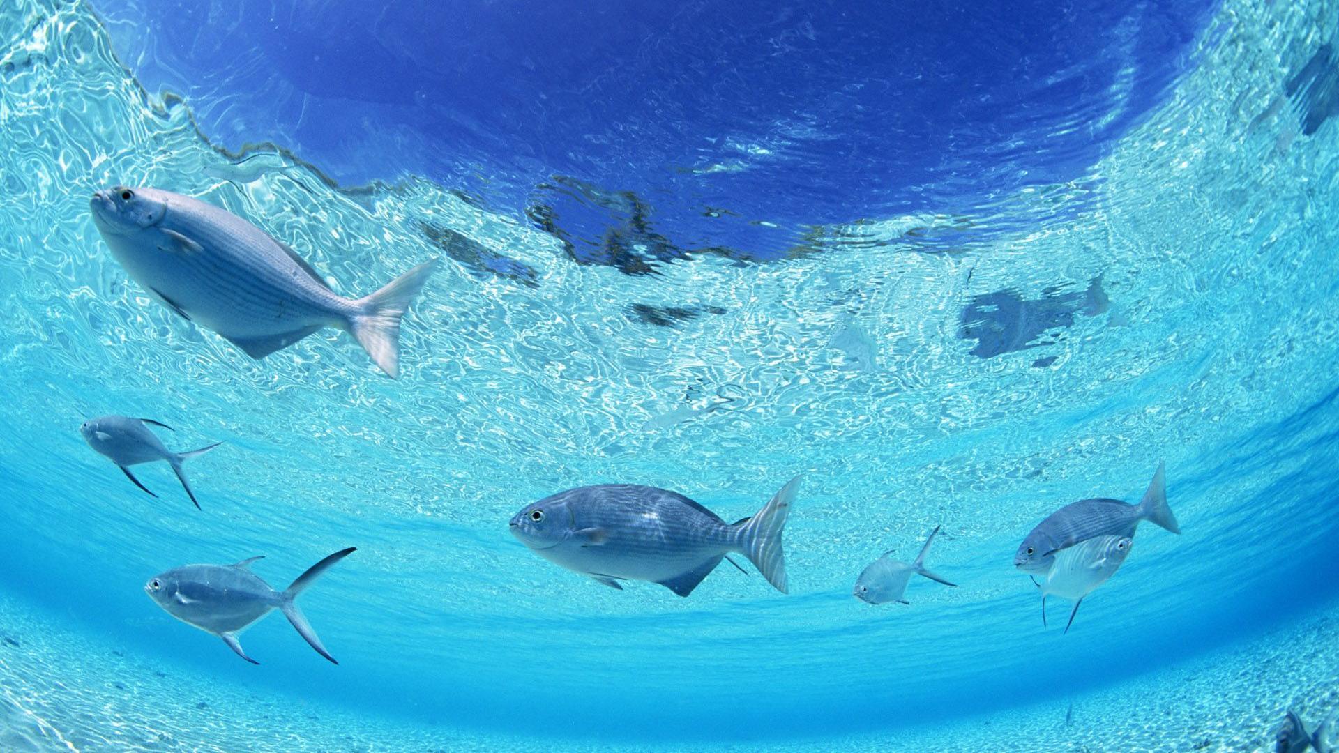 Hd wallpaper underwater - Underwater Wallpaper Hd Wallpaper Wallpapers55 Com Best Wallpapers