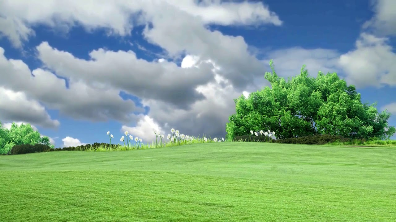 Natural Grass Field Background Video Grass with Natural Motion 1280x720