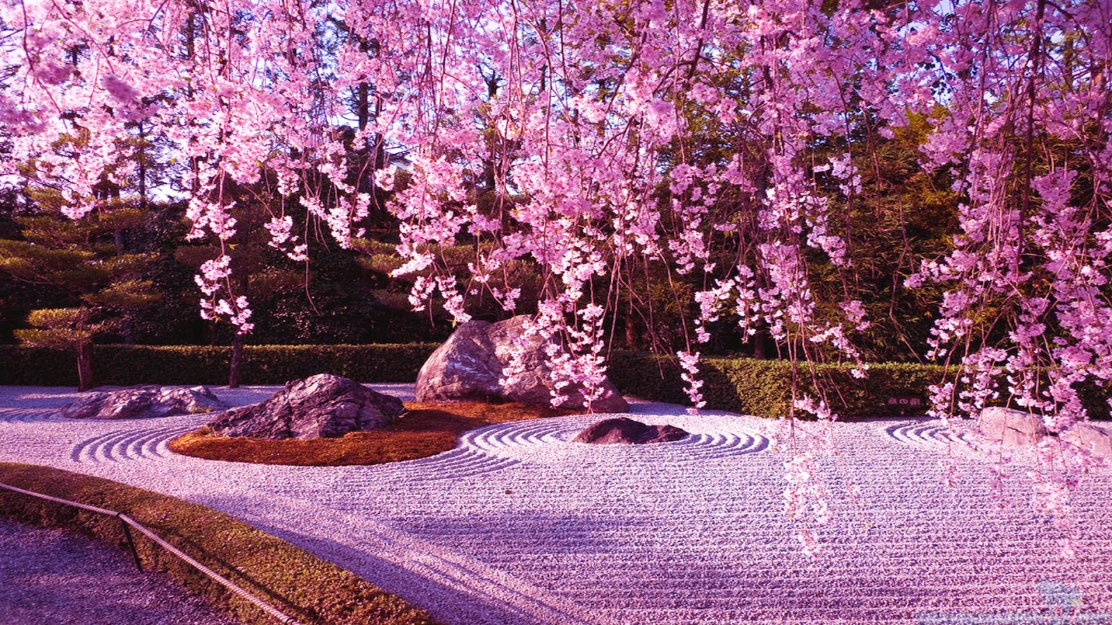 japanese garden cherry blossom paintings - Japanese Garden Cherry Blossom Paintings