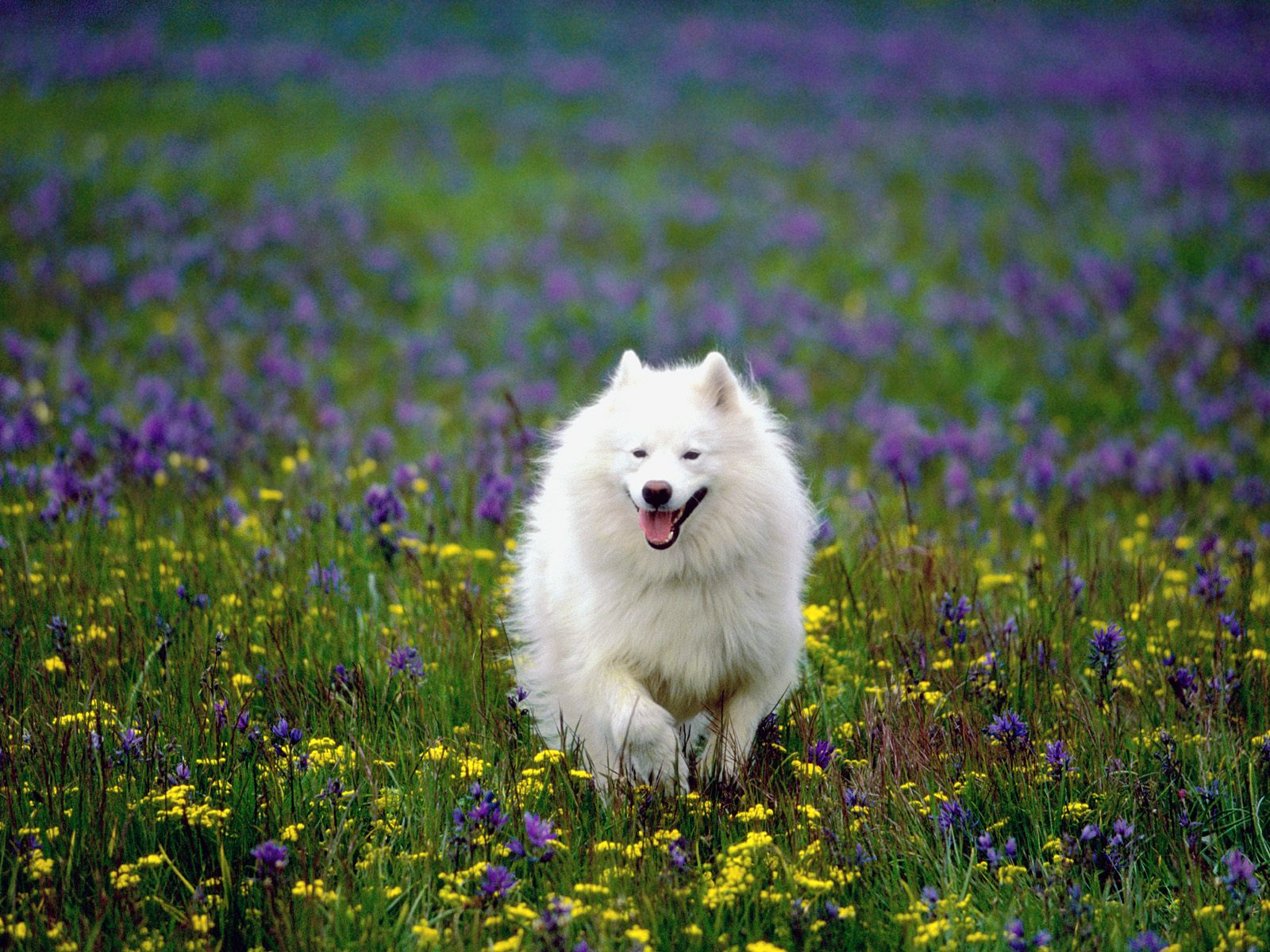 Beautiful Wallpapers For Desktop Beautiful HD puppies Dogs wallpapers 1600x1200