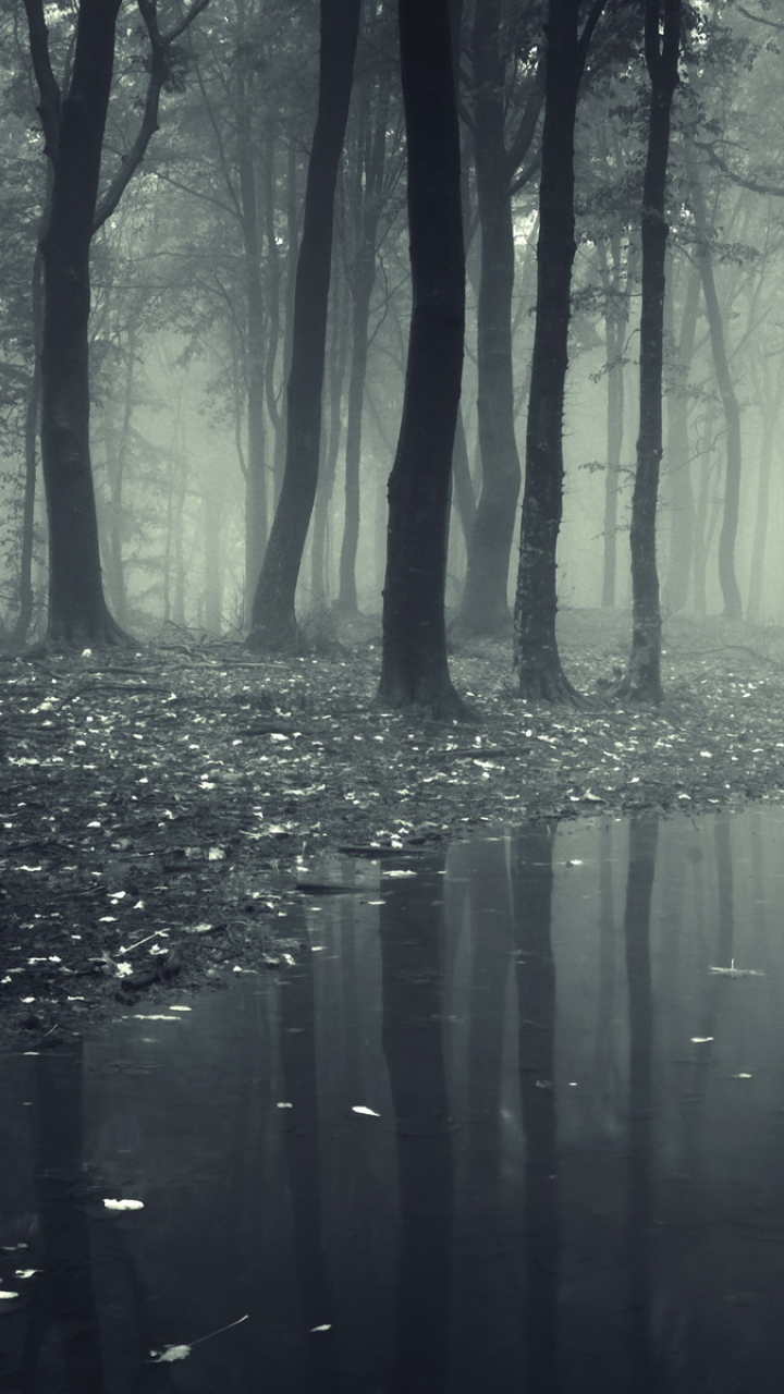 23 Dark Forest Hd Mobile Wallpaper On Wallpapersafari