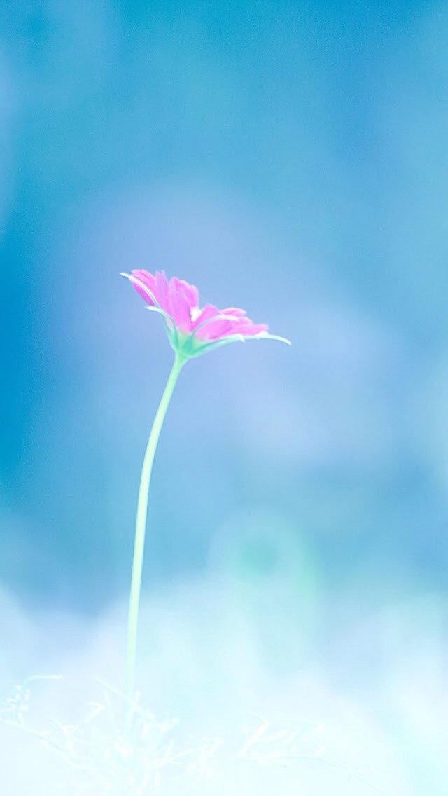 Small Pink Flower Wallpaper   iPhone Wallpapers 640x1136