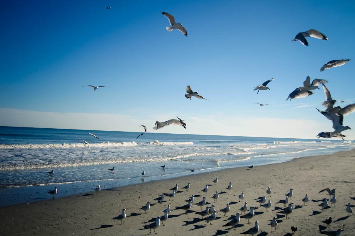 Sea Shore Myrtle Beach Sc