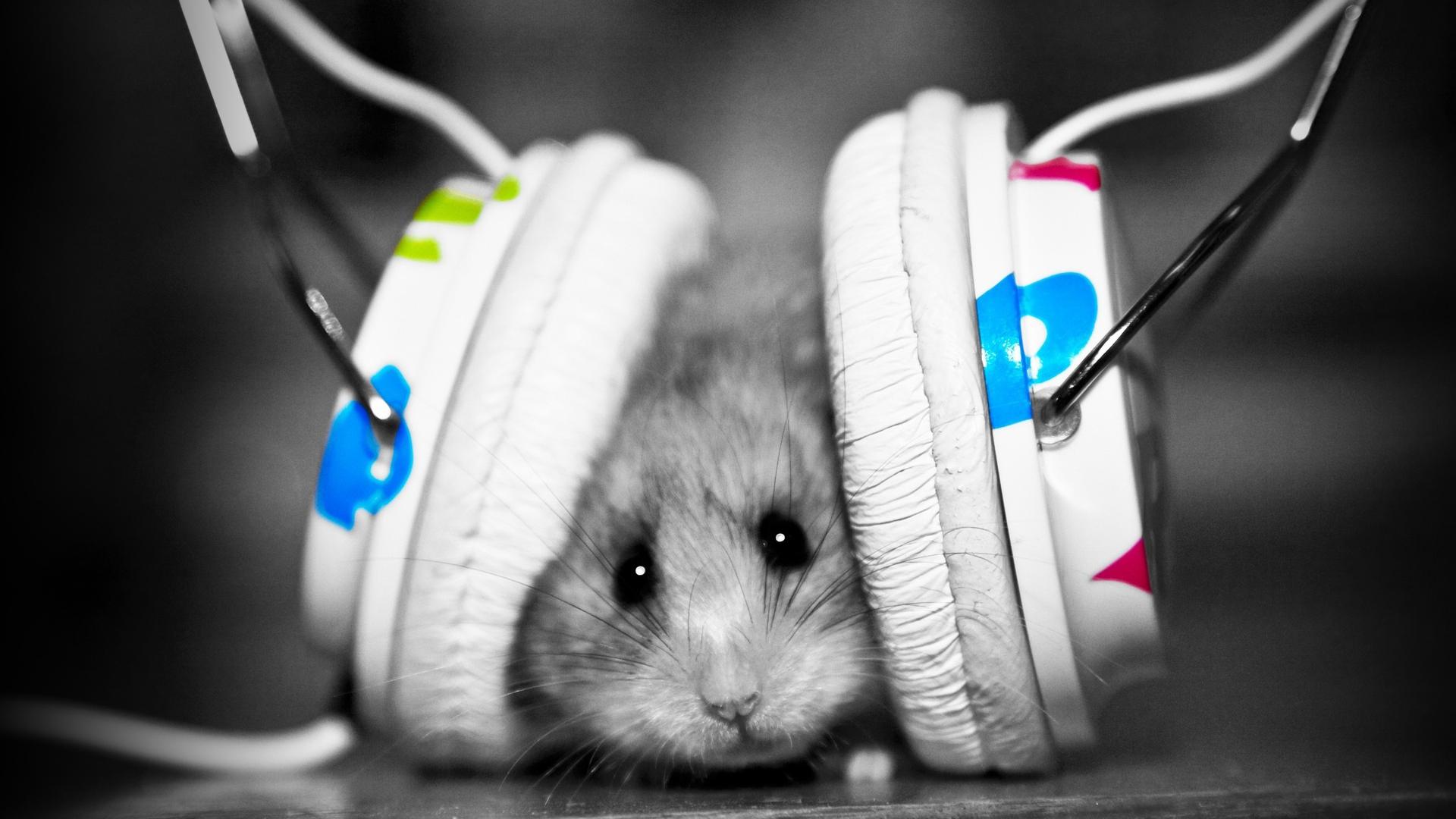 Hd wallpaper music - Music Fan Hamster Full Hd Desktop Wallpaper 1080p