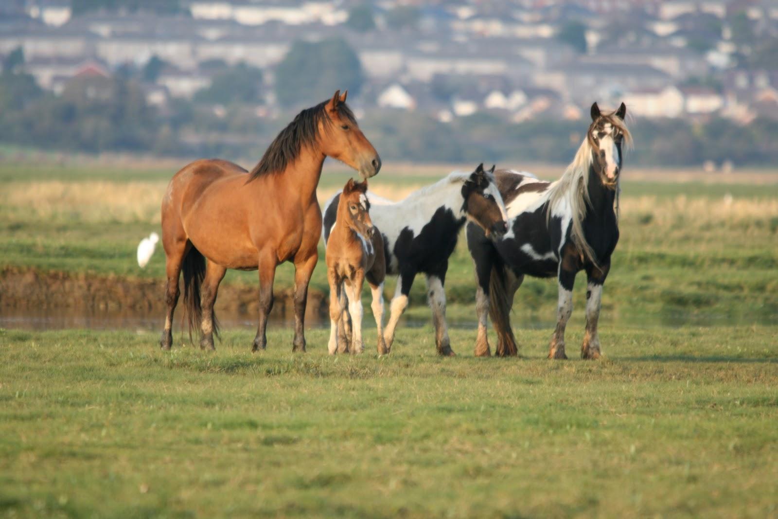 wild horses wallpapers Zone
