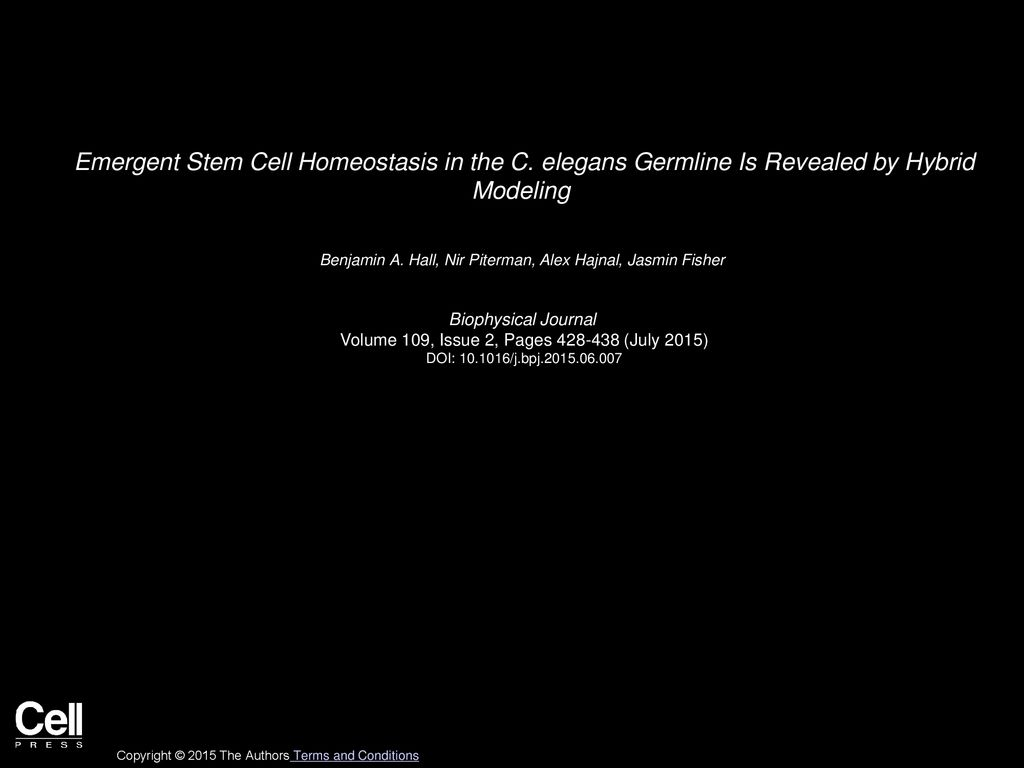 Emergent Stem Cell Homeostasis in the C   ppt download 1024x768