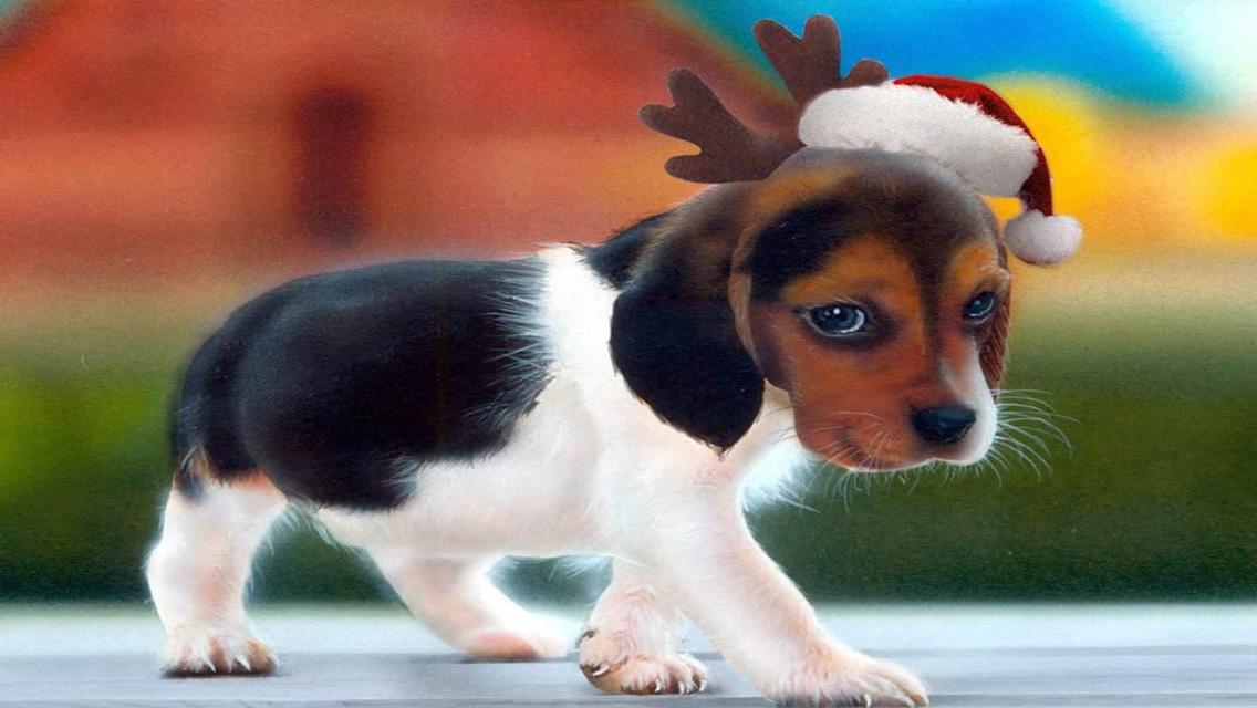 49] Christmas Wallpaper with Dogs on WallpaperSafari 1136x640
