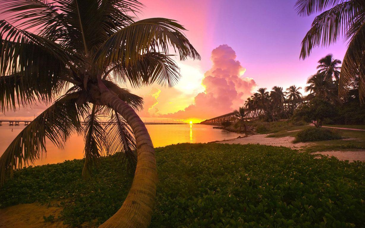 Download Orange and pink beach sunset wallpaper 1229x768