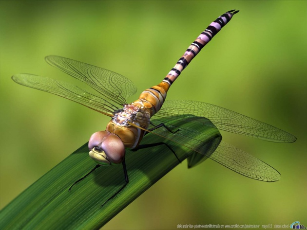 3d graphics 3d dragonfly 630x473