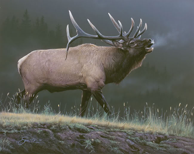 [50+] Free Elk Wallpaper And Screensavers On WallpaperSafari