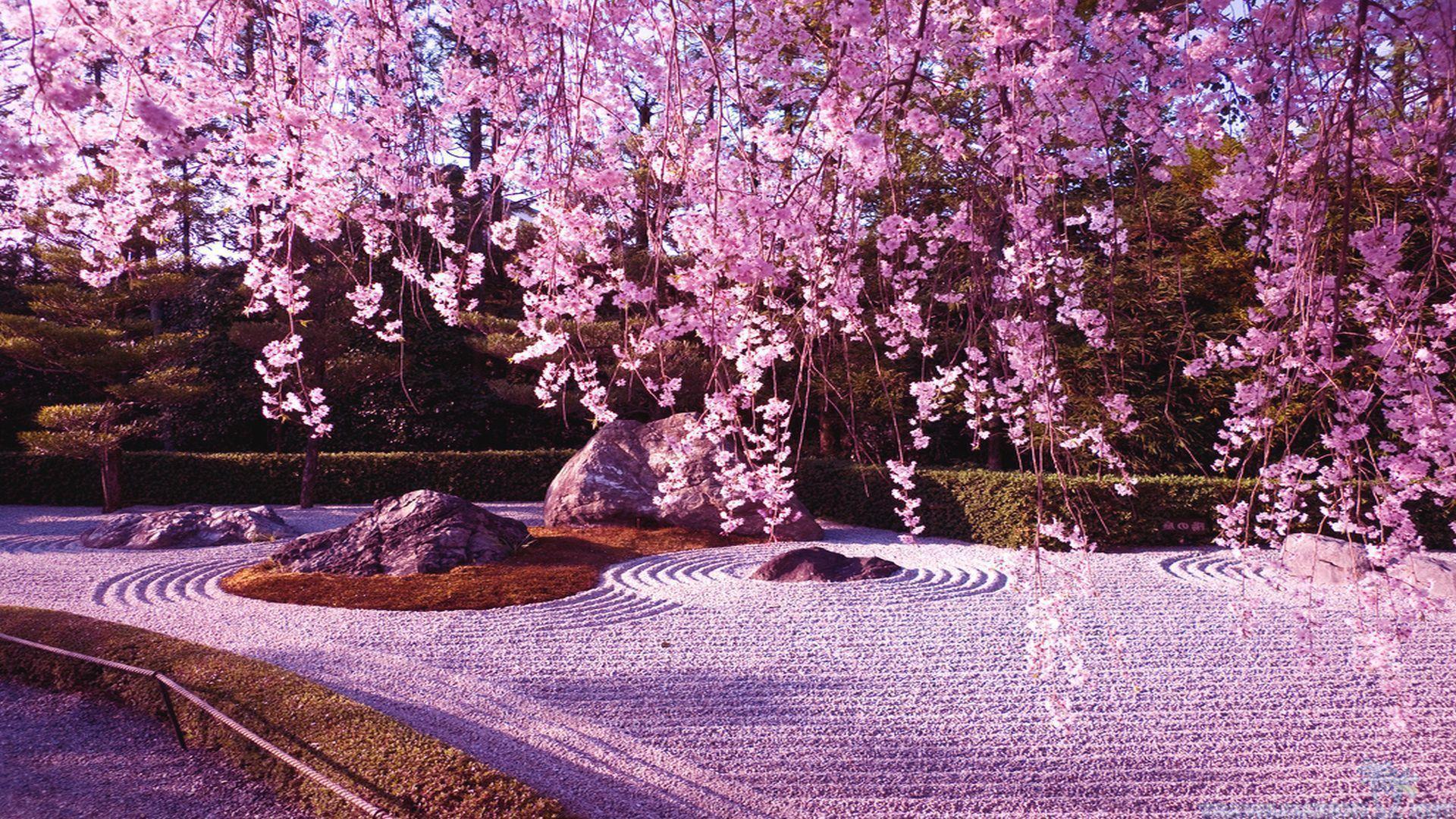 Cherry Blossom Desktop Wallpapers 1920x1080