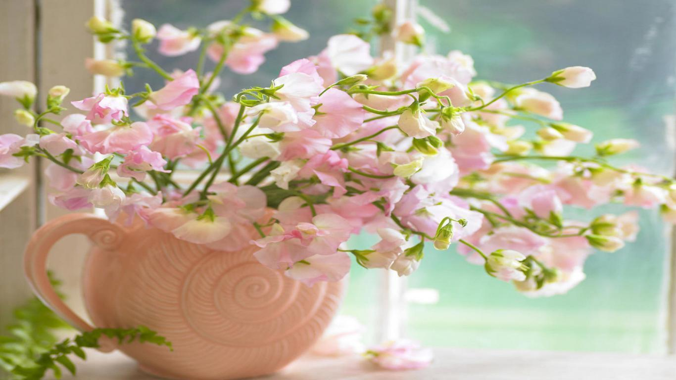Spring Flowers Wallpapers 1366x768