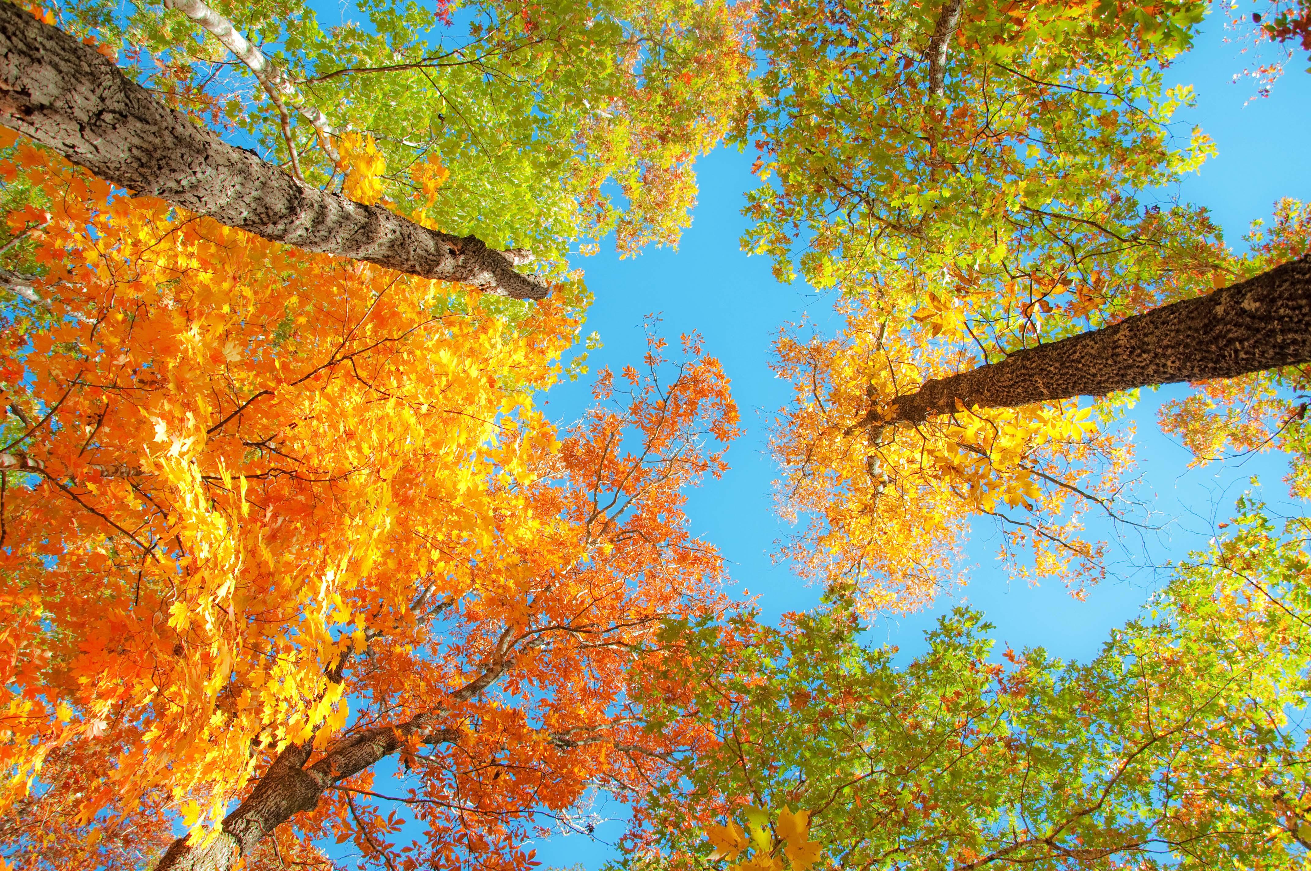 Fall Foliage Desktop Wallpapers | PixelsTalk.Net