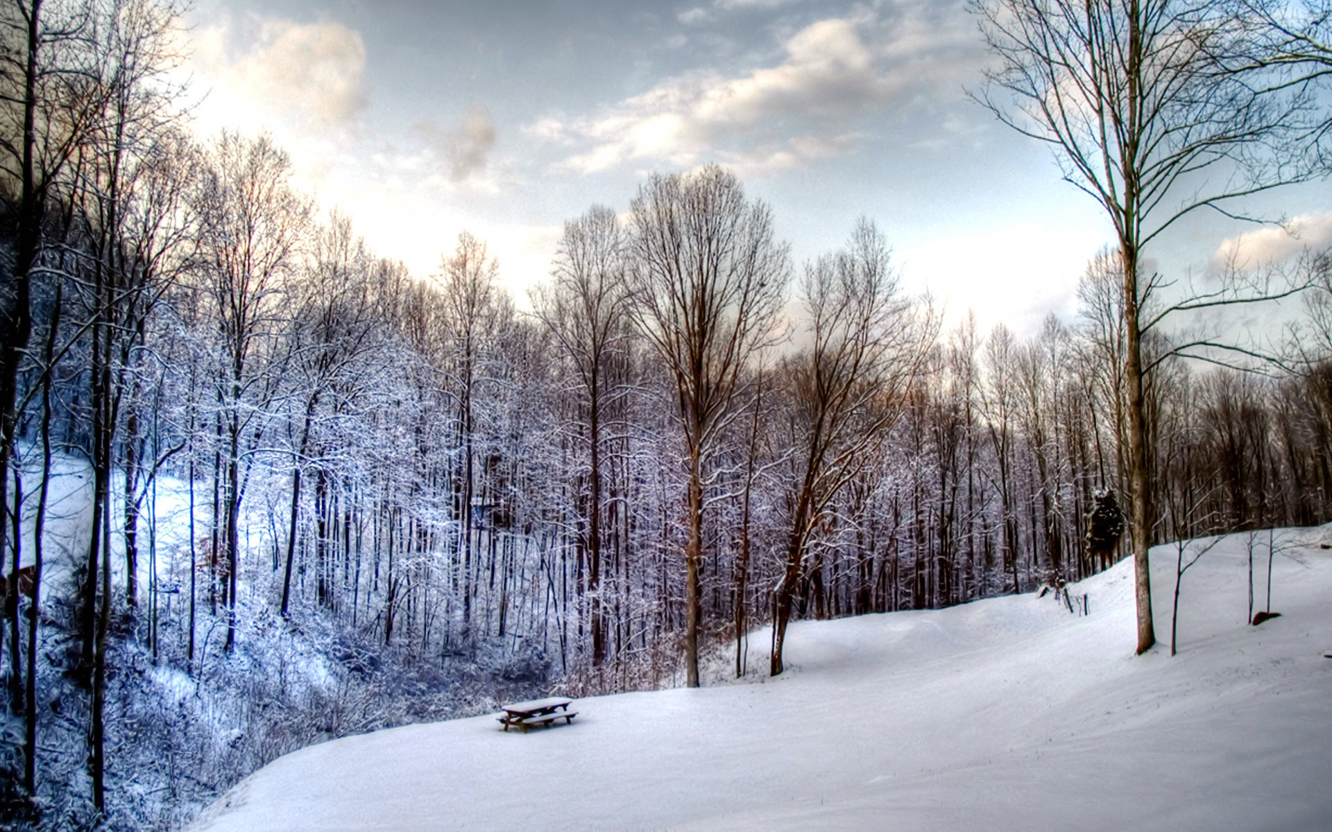 19201200 Widescreen Winter Snow Scenes   Dreamy Winter Snow 1920x1200