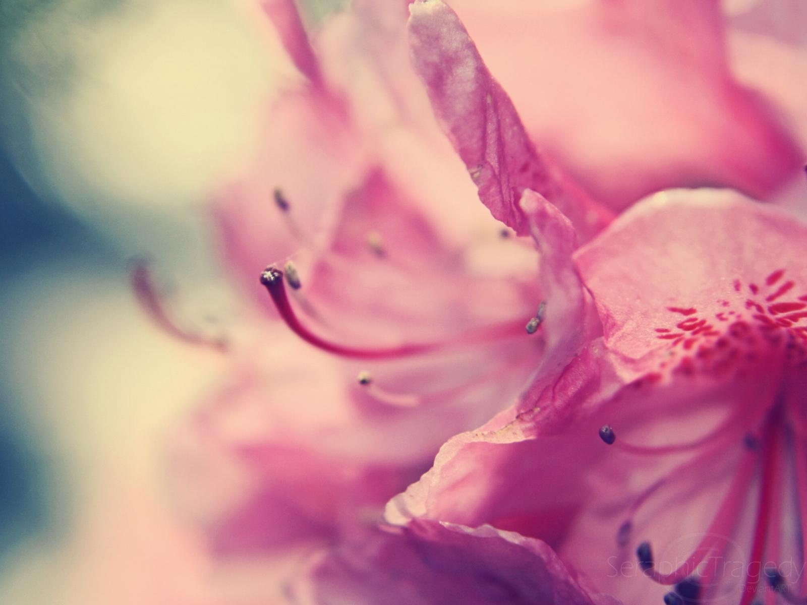 Flowers Pink Wallpaper HD Dekstop 1600x1200