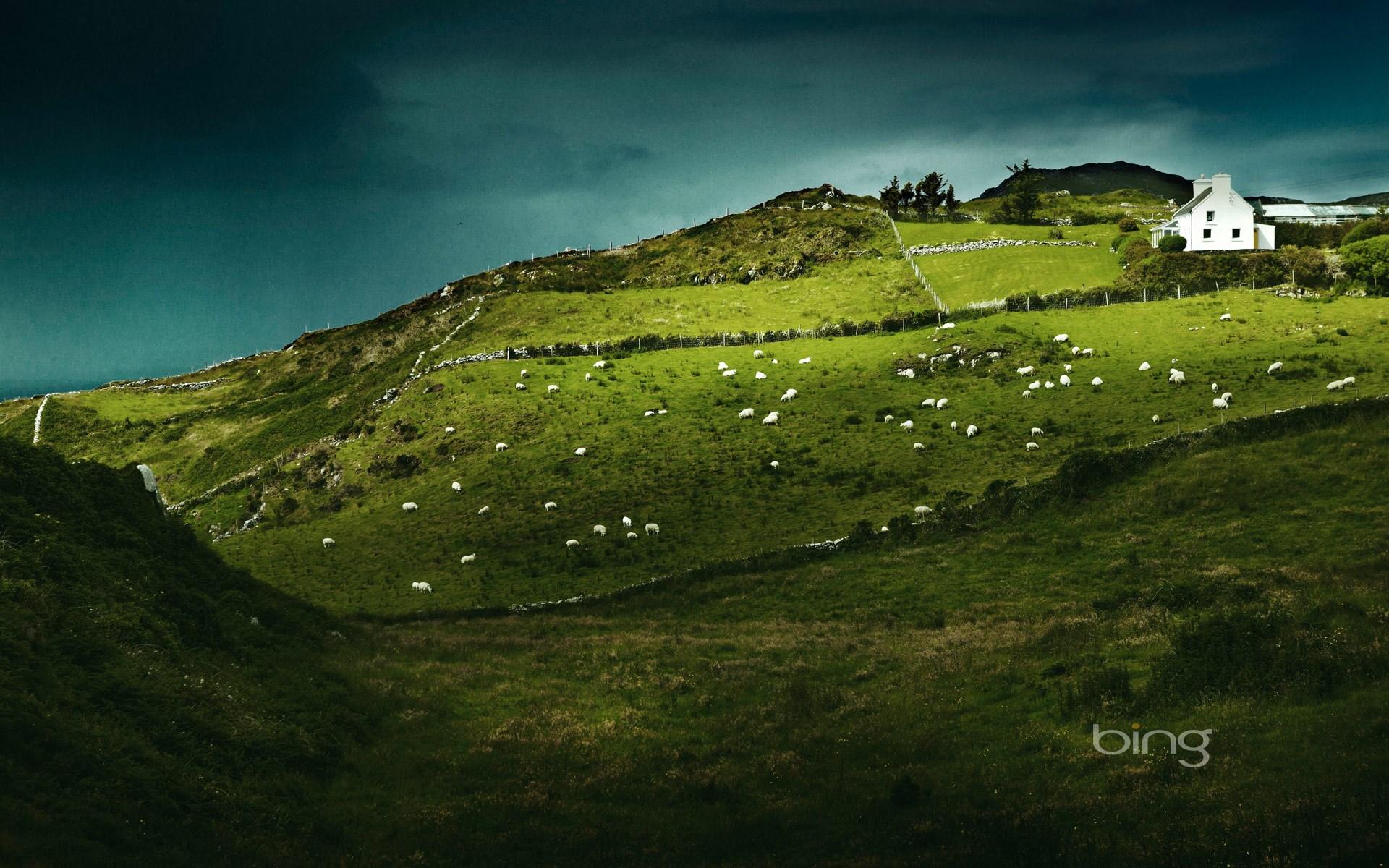 Sheeps Head Ireland Computer Wallpapers Desktop Backgrounds 1920x1200
