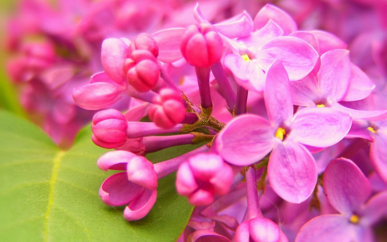 Charming feminine pink Flowers HD Wallpaper 5 Flower Wallpapers 1280x800