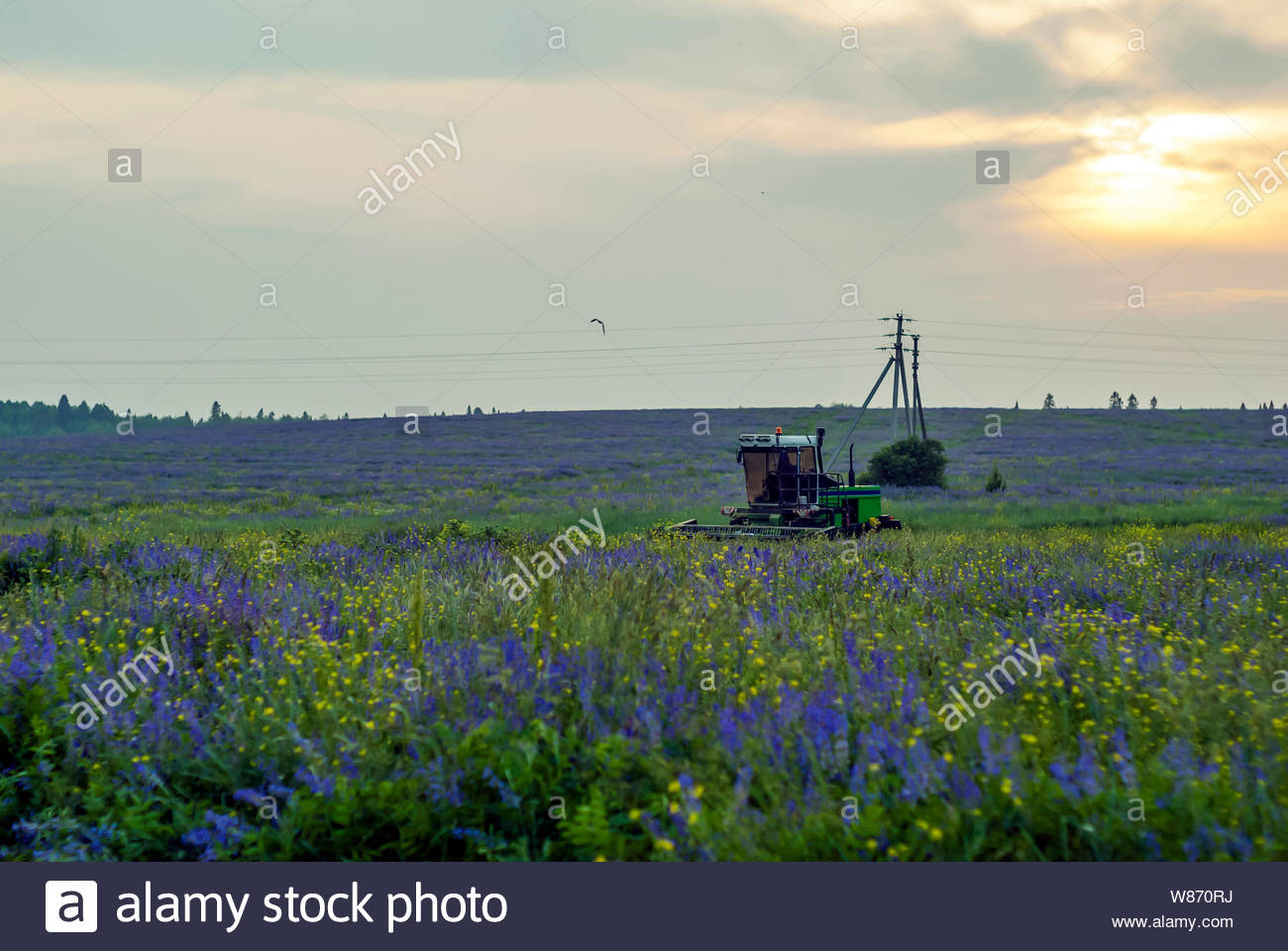 pastoral landscape with a flowering meadow and a machine for 1300x960