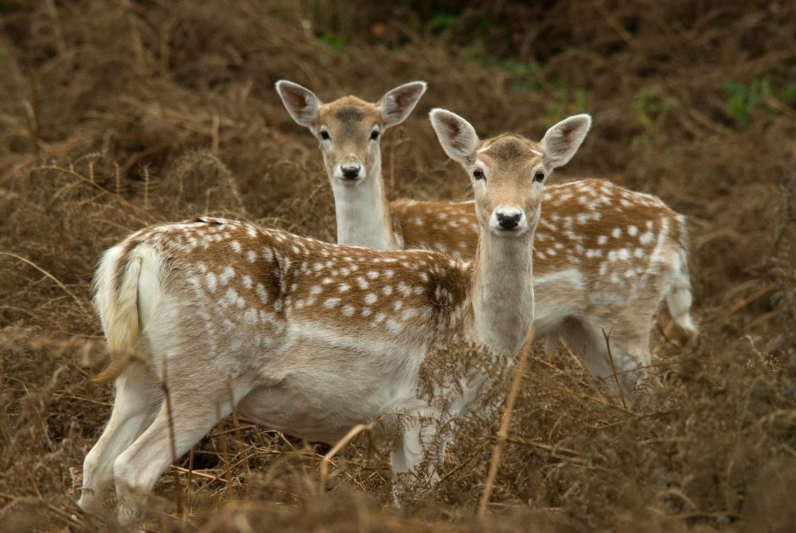 Beautiful Wallpapers deer wallpaper 1600x1071