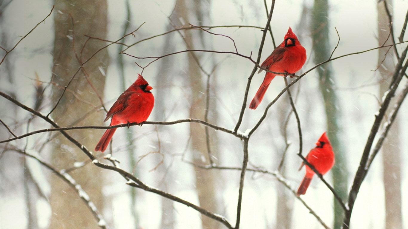 bird Computer Wallpapers Desktop Backgrounds 1366x768 ID461298 1366x768