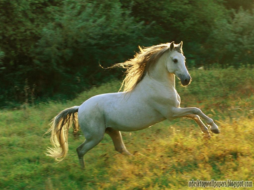 Horse Animal Desktop Wallpapers PC Wallpapers Wallpaper 1024x768