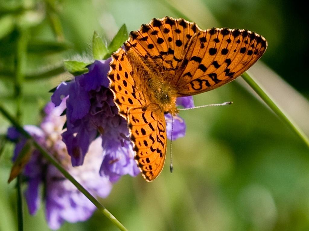 orange butterfly   catsparrots and butterflies Wallpaper 22818208 1024x768
