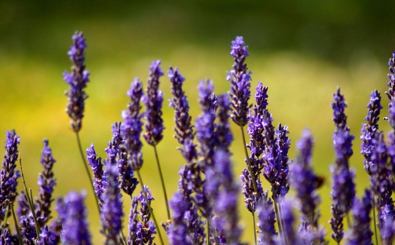 Provence France   Wallpaper for Android   APK Download 1280x796