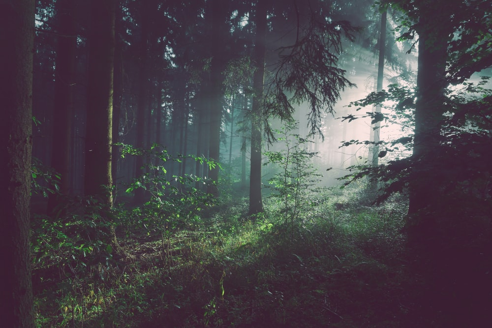 Forest Wallpapers HD Download [500 HQ] Unsplash 1000x667