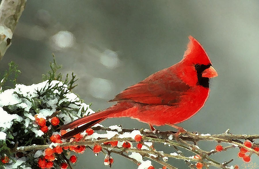 Red cardinal wallpaper wallpapersafari - Pictures of cardinals in snow ...