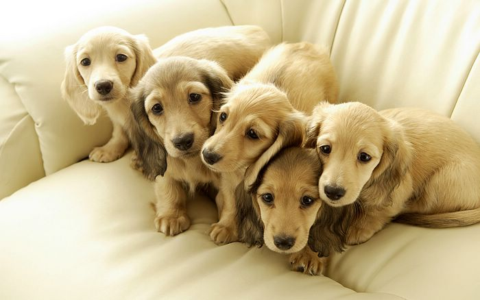 Dogs Cute Dog And Puppies Wallpapers 700x438