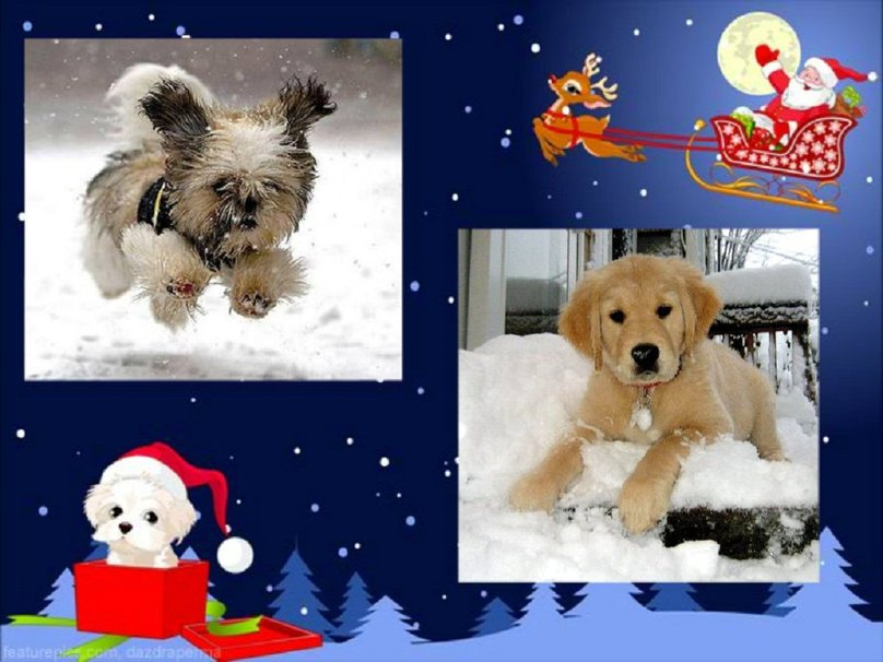 Winter dogs wallpaper   ForWallpapercom 808x606