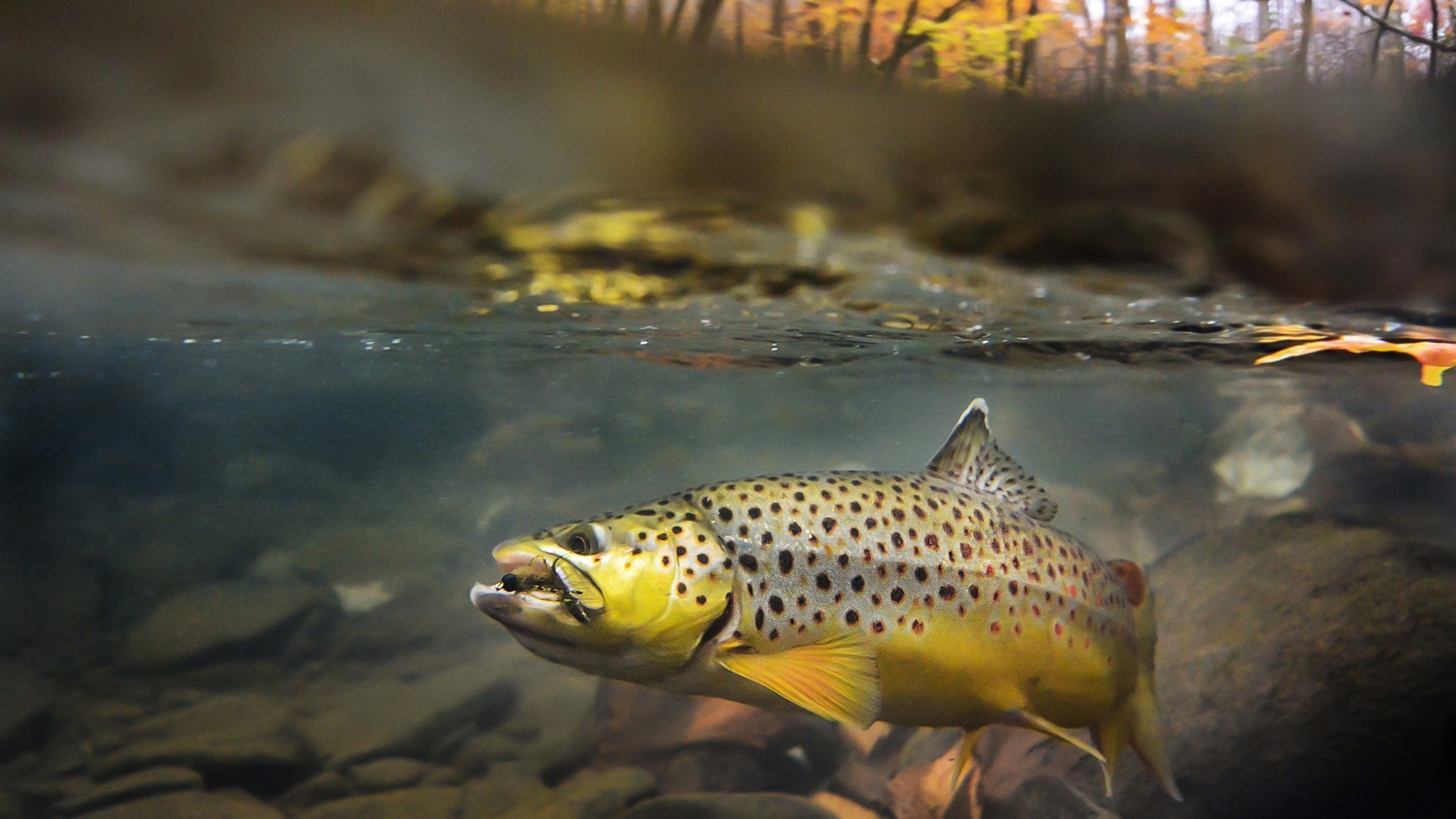 Fly Fishing Pictures Wallpaper   Image Of Fishing 2000x1125