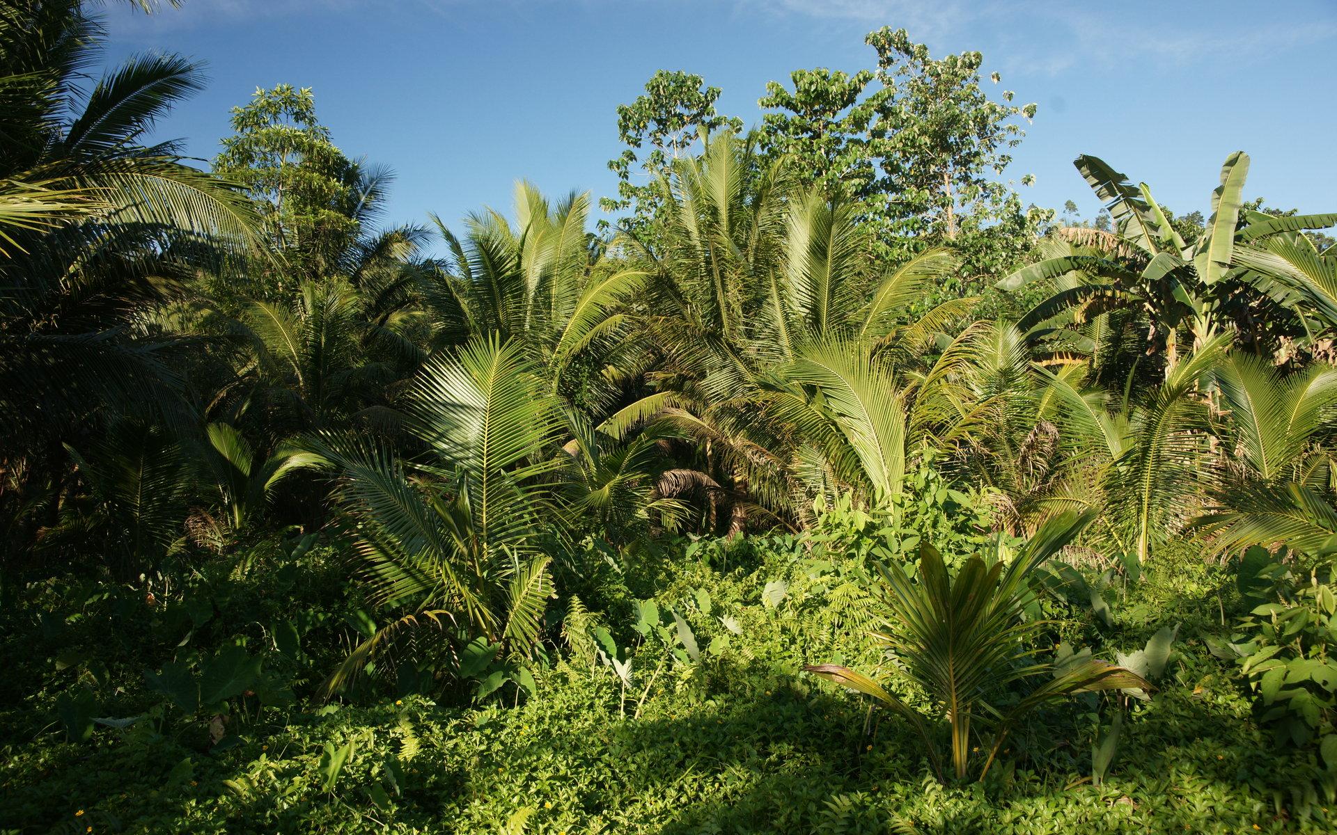 собраны смотреть фото пальм тропических карман