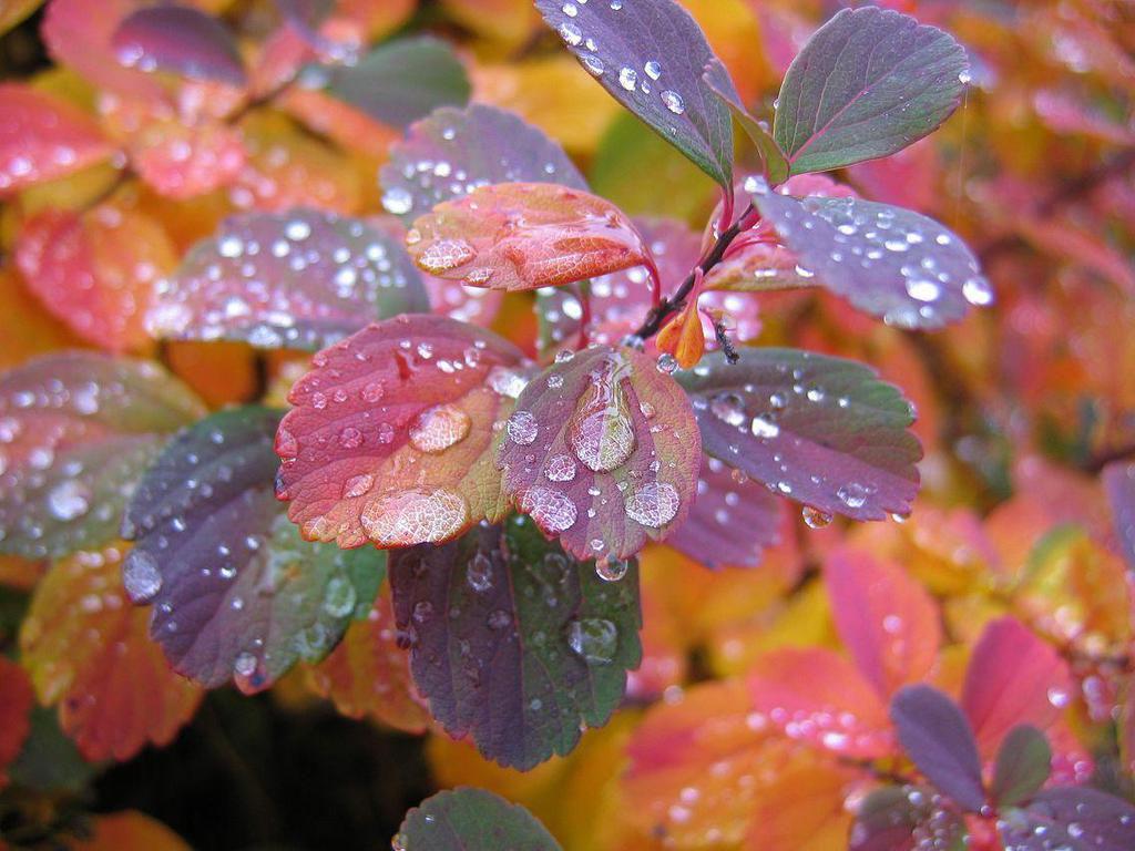 Beautiful Wallpapers Beautiful Rain Wallpapers for your desktop 1024x768