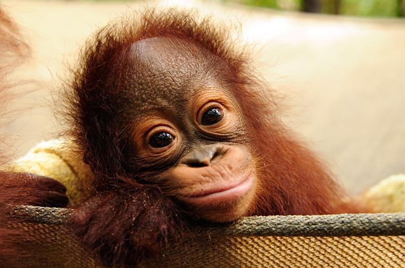 Funny baby animal wallpaper