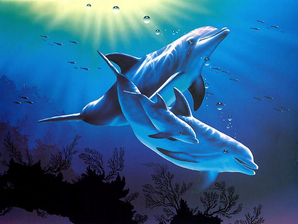 Dolphins 3d Desktop   Dolphins 3d Desktop 1024x768