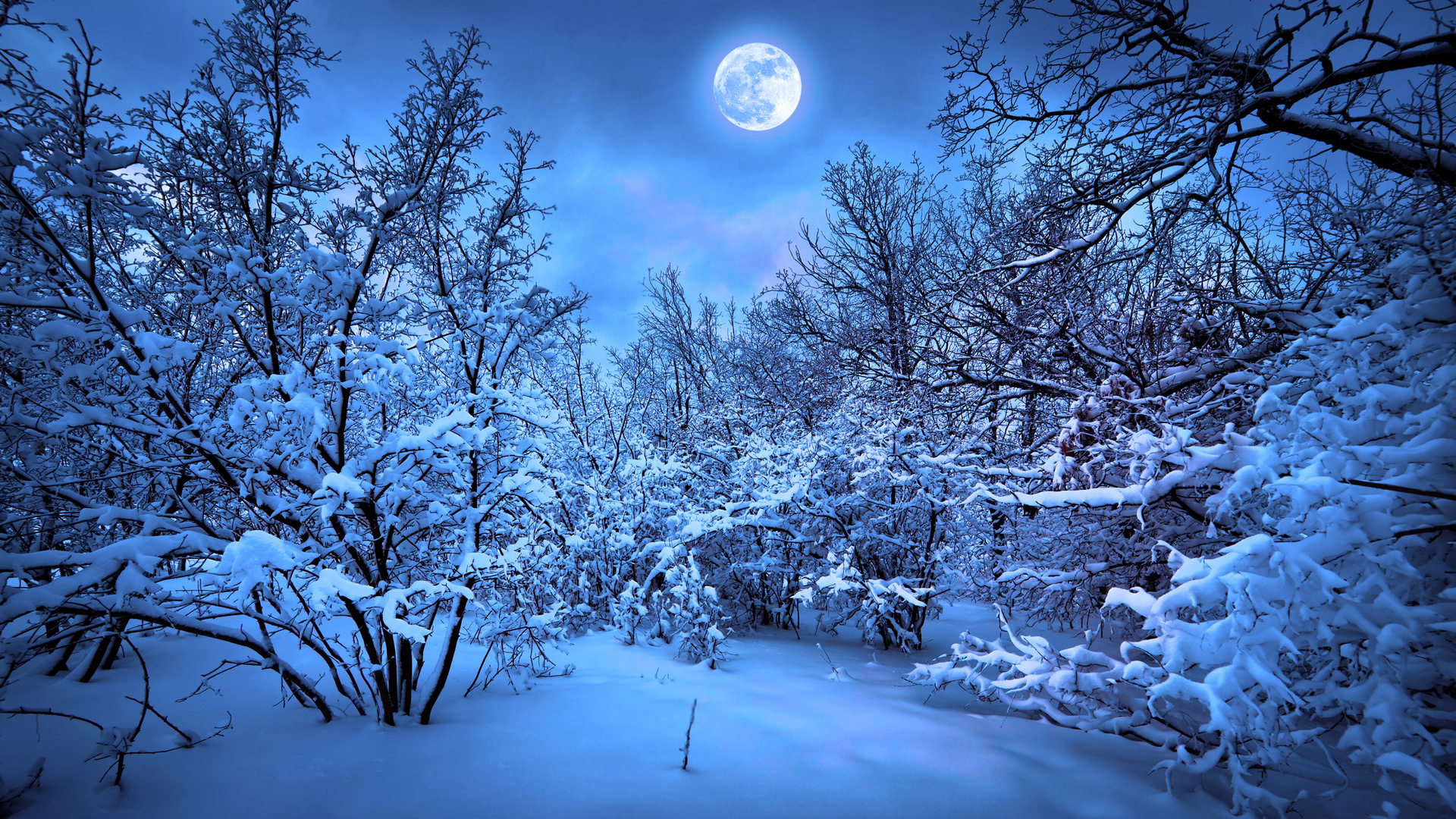 forest moon night snow winter f wallpaper background 1920x1080