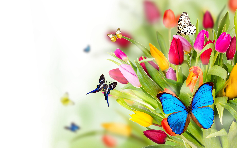 Flowers and butterflies wallpaper   SF Wallpaper 2880x1800