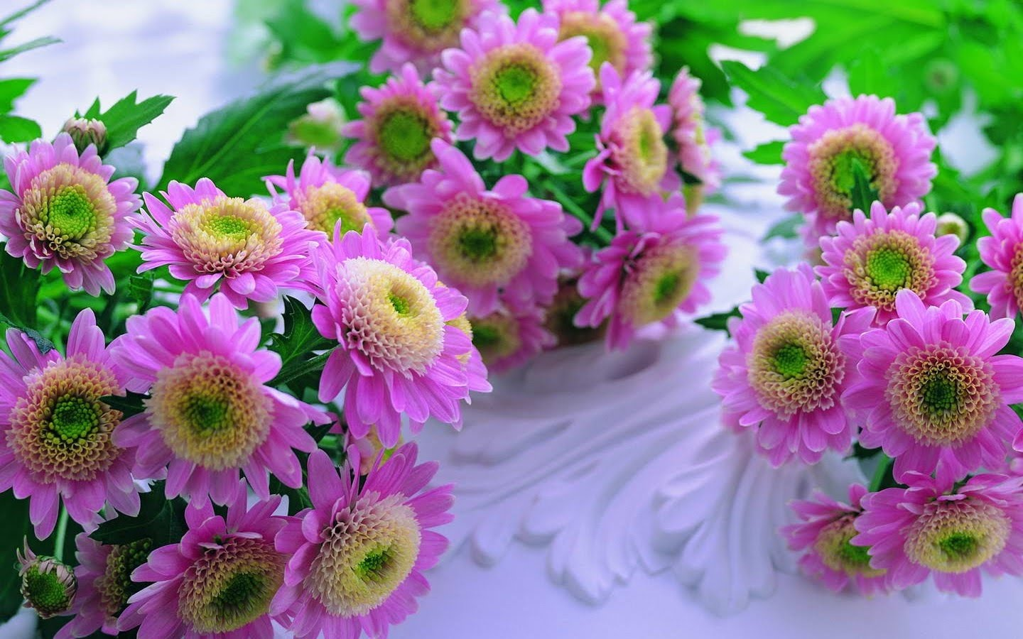 flowers for flower lovers Desktop Beautiful Flowers HD Wallpapers 1440x900