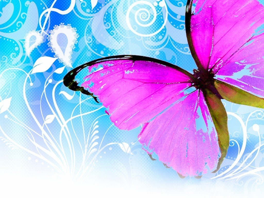 Cute butterfly wallpaper Colorful butterfly wallpaper Butterfly 1024x768