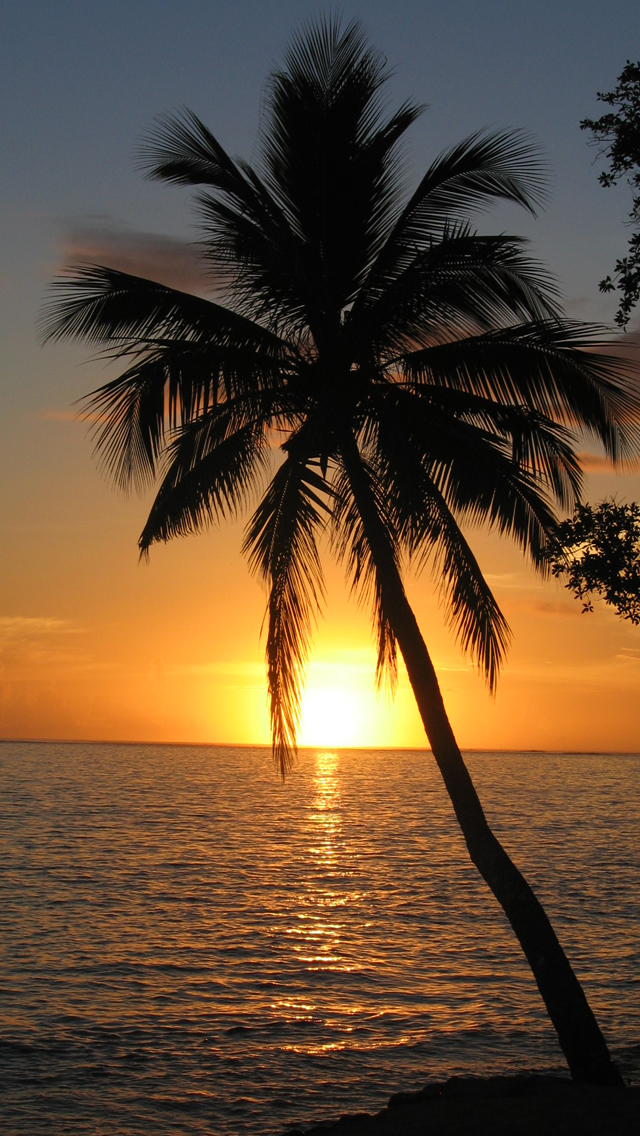 Palm Tree Sunset Wallpaper 640x1136
