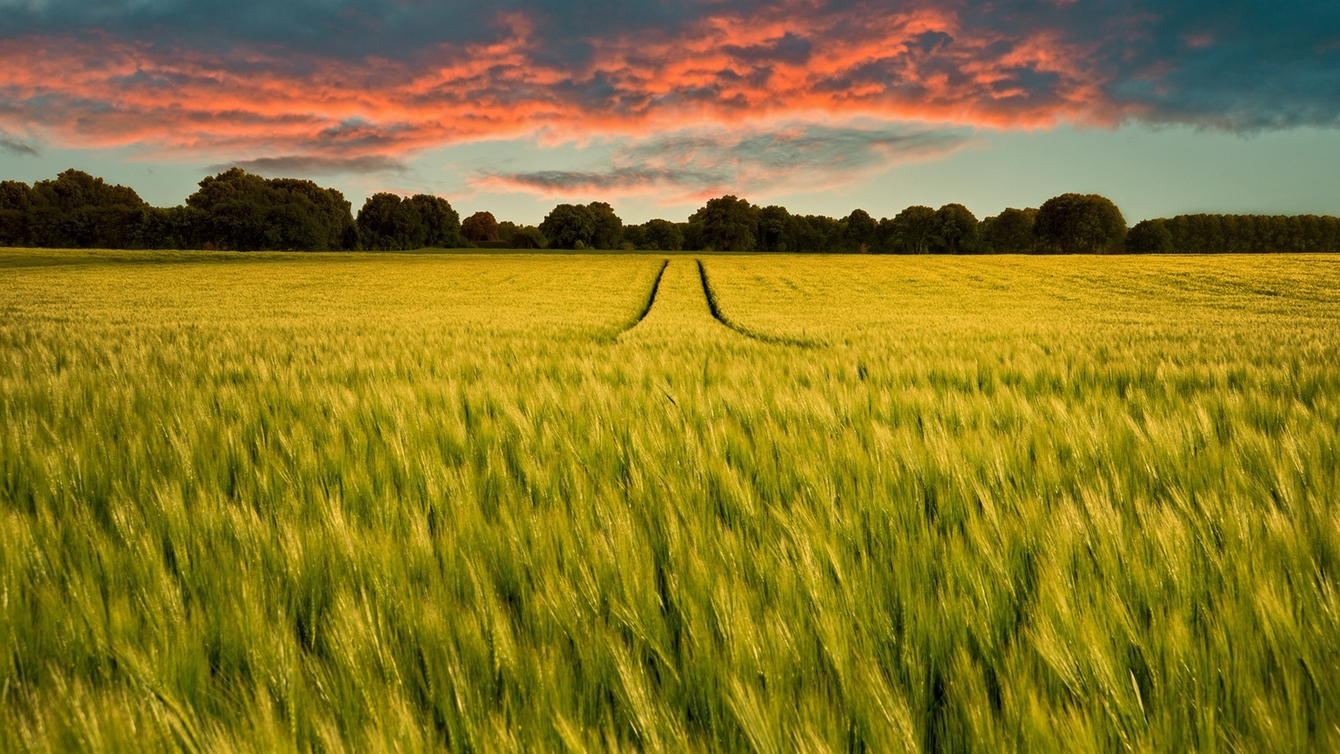 Green field rye horizon trees sunset wallpaper Nature and 1920x1080