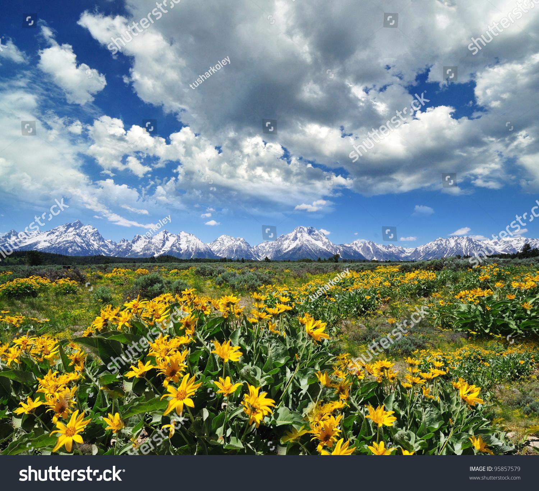 Yellow Flowers Grand Tetons Background Stock Photo Edit Now 95857579 1500x1366