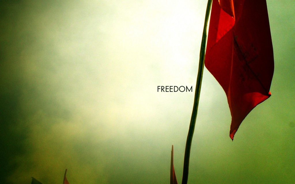 Freedom Wallpapers   8905 1024x640