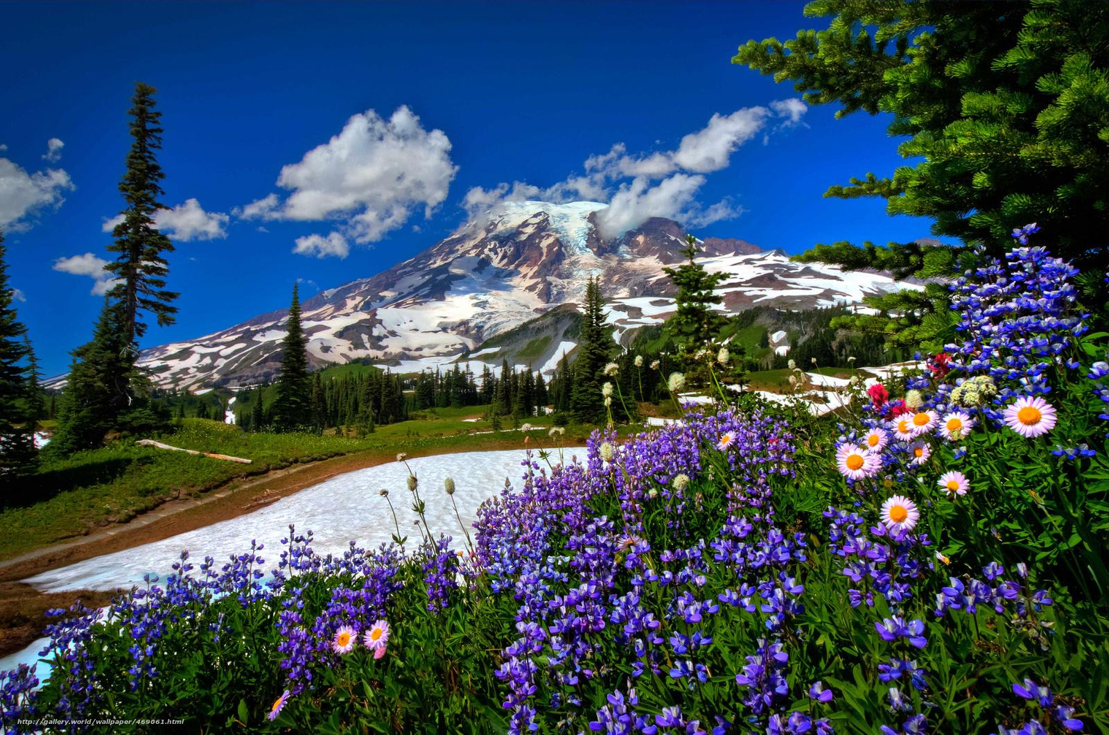 Mount Rainier Mountains And 1600x1060