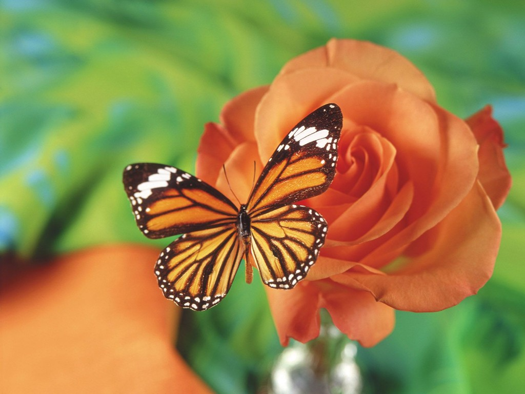 flowers butterfly wallpaper flowers butterfly wallpaper 1024x768