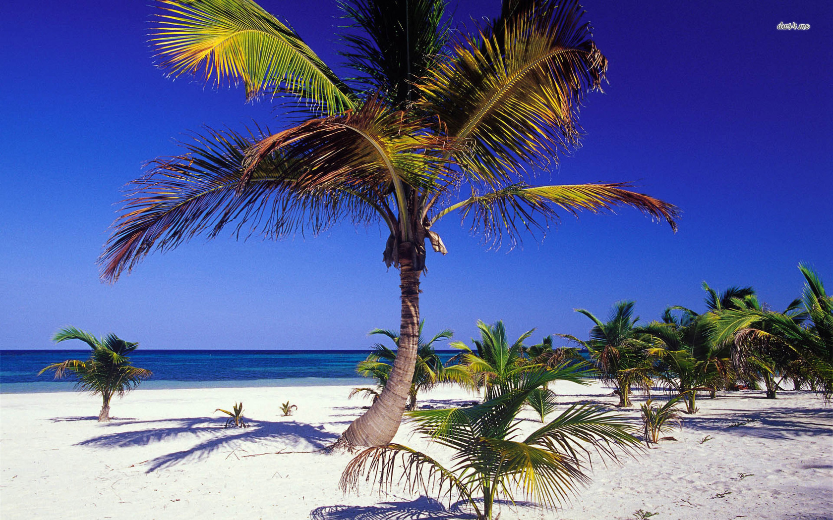 Palm trees in Mexico wallpaper   Beach wallpapers   5076 1680x1050