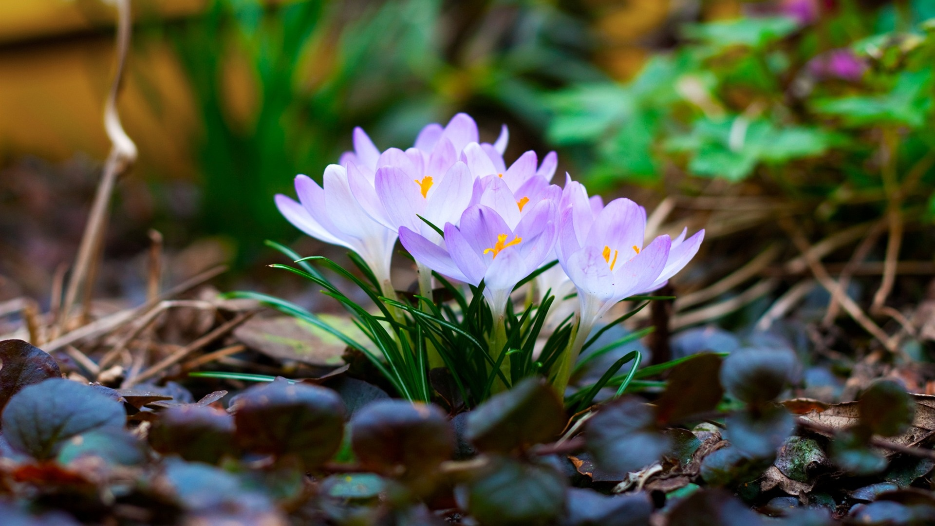 Spring Flowers Pictures For Desktop Flowers Healthy